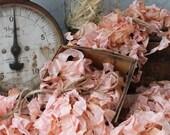 Seam Binding Crinkle Ribbon Vintage Aged Pink - Sewing- Crafts - Gift Wrap - Trim - 5 yards