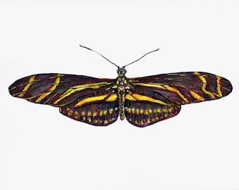 Butterfly 2. Test piece. Zebra Longwing. Watercolour Painting Original Art