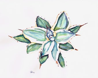 Agave 1.  Agave potatorum Kissho Kan (Kichiokan) variegata. Watercolour Painting Original Art