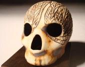 Feather Eyes Skull