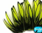 Aime les plumes de goutte, 1 douzaine - plume de poule laçage jaune fluo Cap: 3437
