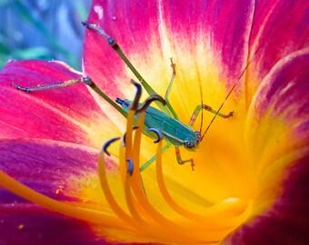 Katydid and the Lily 8 x 10 Photograph