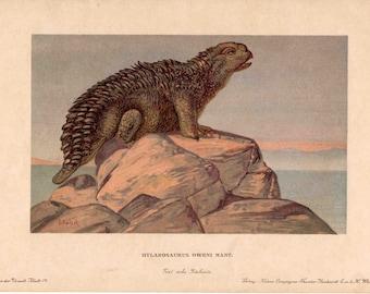 1902 dinosaur rare antique print - hylarosaurus