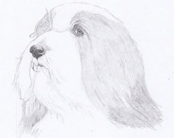 Bearded Collie Note Cards - Gift Set of Eight - Free Shipping US - Original Pencil Art Design - Desert Impressions