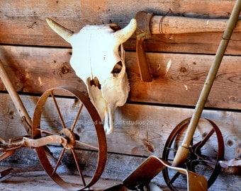 Bison Skull Photo, Antique Farm Implements,  Fine Art Photo