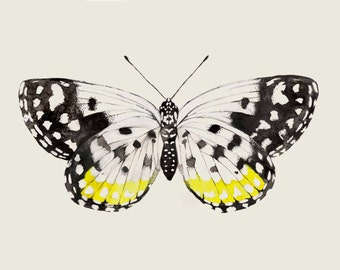 Butterfly Art - Black & Yellow Butterfly - Butterfly Watercolor Painting - Butterfly Print