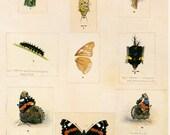 Butterflies & Cocoons Print Book Plate SALE Buy 3, get 1 FREE