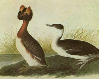 Audubon Prints two to a page CLEARANCE