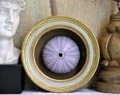 Sea Urchin Specimen - Gilt Framed - Natural Curiosity - Wunderkammer