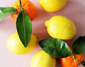Lemons & Clementines on Pink