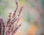 Lavender Floral Photograph, Ethereal, Pastel, Purple, Pink, Green, Romantic, Flower photograph, Purple Lavender, Wall decor, Feminine