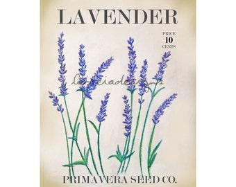 Lavender Art - Botanical Art Print - Botanical Print - Spring Art - Spring Decor - Garden Art - Garden Decor - Fine Art Print - Flower Art