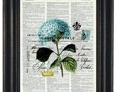 BOGO SALE Flower Art Print Botanical Dictionary  Upcycled Art Dictionary Print of Blue Flower and Post Card on Vintage Dictionary Book Page