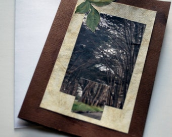 Note Card, Forest, Blank, All Occasion