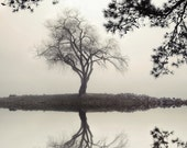 landscape photography, black and white, nature, trees, willow tree, Winter Willow, 2013