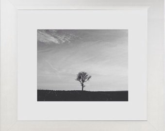 Black & White Tree (Matted and Framed 8x10 Photograph)