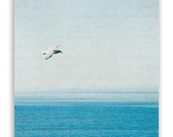 SALE - Seaside decor, turquoise and grey photography, ocean bird flight soar - 6x6 Fine Art Photograph - SAVE 60%