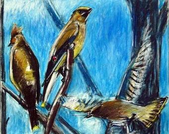 Cedar Waxwings at Morris Arboretum Pastel and Charcoal Drawing