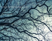 Tree branches in winter hues blue grey 8 x 10 Fine Art Print