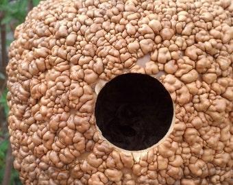 Warty gourd birdhouse, natural gourd birdhouse
