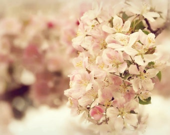 Apple Blossoms Floral Photography Flower,pink,spring,springtime,soft dreamy decor,shabby chic,baby nursery decor,gift under 25,delicate