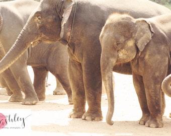 Elephant Print, Elephant Photography, Nursery Print, Baby Elephant Photograph