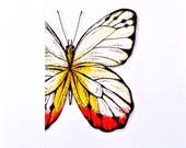Delias Butterfly -  Original Watercolor and ink painting