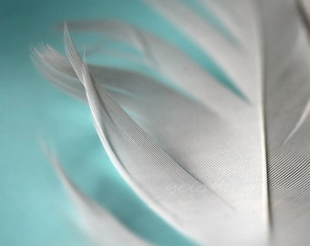 feather photograph aqua white blue pastel color nursery wall art delicate angelic