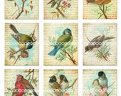 Digital Clipart, Vintage Birds--songbirds, lovebirds, thrush, finch, chickadee, printables--Digital Collage Sheet (8.5 by 11 inches) 196