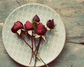 Rose photograph, red, teal,romantic, valentines day, flower photo, rustic, plate, still life photo, floral, fine art print, 8x10 print