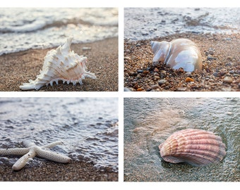 Beach Photography Set,  Beach Wall Gallery, Seashell Photo, shell photography. Fine Art Photography, Coastal Wall Decor, Beach Photo set