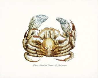 Antique French Blue Claw Crab Natural History Giclee Art Print