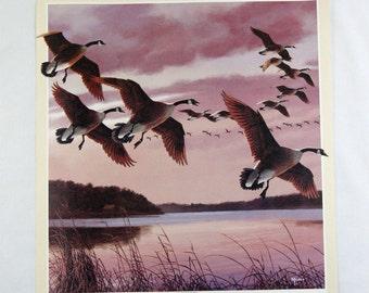Vintage 1980's David Maass Homeward Formation Canadian Geese Print