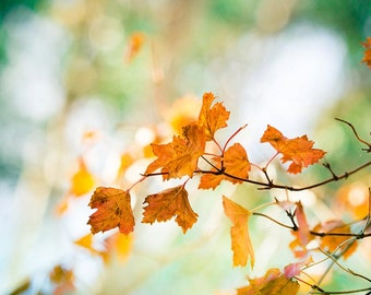 autumn photography leaves 8x10 20x30 fall photography fine art nature photography large botanical wall art orange green rust autumn decor