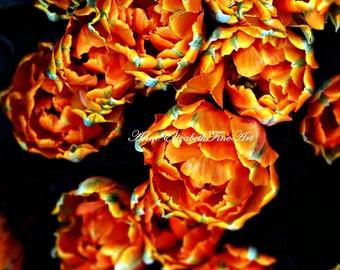 Tulip Art,Parrot Tulip,Orange,Teal Blue Print,Botanical,Paris,Parisian,Bokeh,Flower,Rococo,Romantic,Color,Tulip Picture,Rainbow,French,Chic