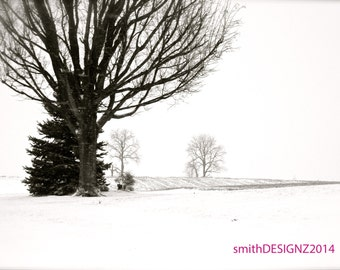 Winter Wonderland, Winter Photography, Home Decor, Vinyl Wall Decal, by Abby Smith, Free Shipping