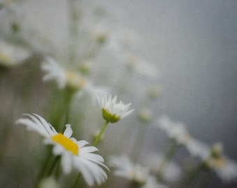 Daisy Photograph, Dreamy Flower Photography, White Floral Picture, Gray and Yellow Wall Art, 8x10 Garden Photo