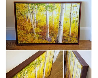 "20"" x 30"" Print on Canvas, Aspen Trees, Colorado Aspens, Fall, Landscape, Fine Art Print - ""Chasing The Colors of Fall"""