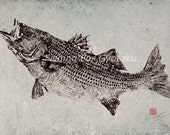 STRIPED BASS reproduction GYOTAKU - traditional Japanese fish art Discounted & Discontinued