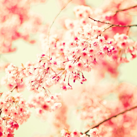 Https Etsy Com Listing 189800878 Spring Decor Cherry Blossom Photography