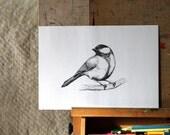 Original Pencil Drawing, Chickadee Bird Illustration, OOAK, Fine Art by Barbara Szepesi Szucs