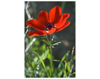 A Red Flower Picture