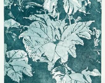 Gunnera Etching - Botanical Print - Hand Pulled Print - Gunnera Plant - Printmaking By William White  - FREE SHIPPING