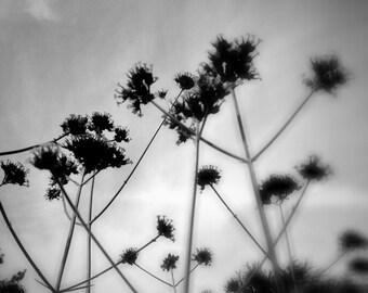 Black & White Photograph Meadow Grass