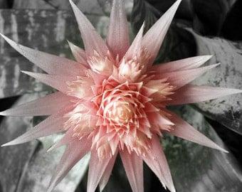 Pink Succulent 1