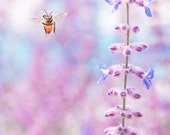 Honey Bee Hovering In Lavender Garden -Spring Summer Nature -Pink Orchid & Blue -Home Decor Wall Art - Fine Art Photograph Print