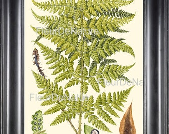Antique Fern Print Art 49 Beautiful Large Green Fern Forest Summer Nature to Frame Home Decor 4x6 5x7 8x10 11x14 Bookplate Illustration
