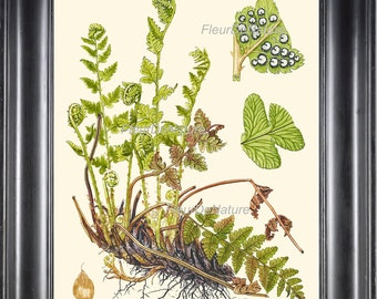 Fern Print Botanical Art Print 4 Antique Beautiful Green Ferns Roots Chart Poster Plant Vintage Nature to Frame Home Wall Decor Gallery