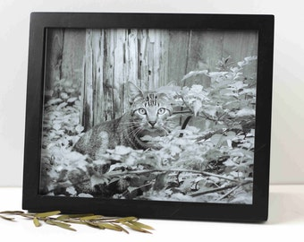 animal charity donation, cat photo, black and white, 3 sizes available