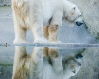 Polar Bear Photography - Oregon Zoo - lustre photograph - fine art - home decor